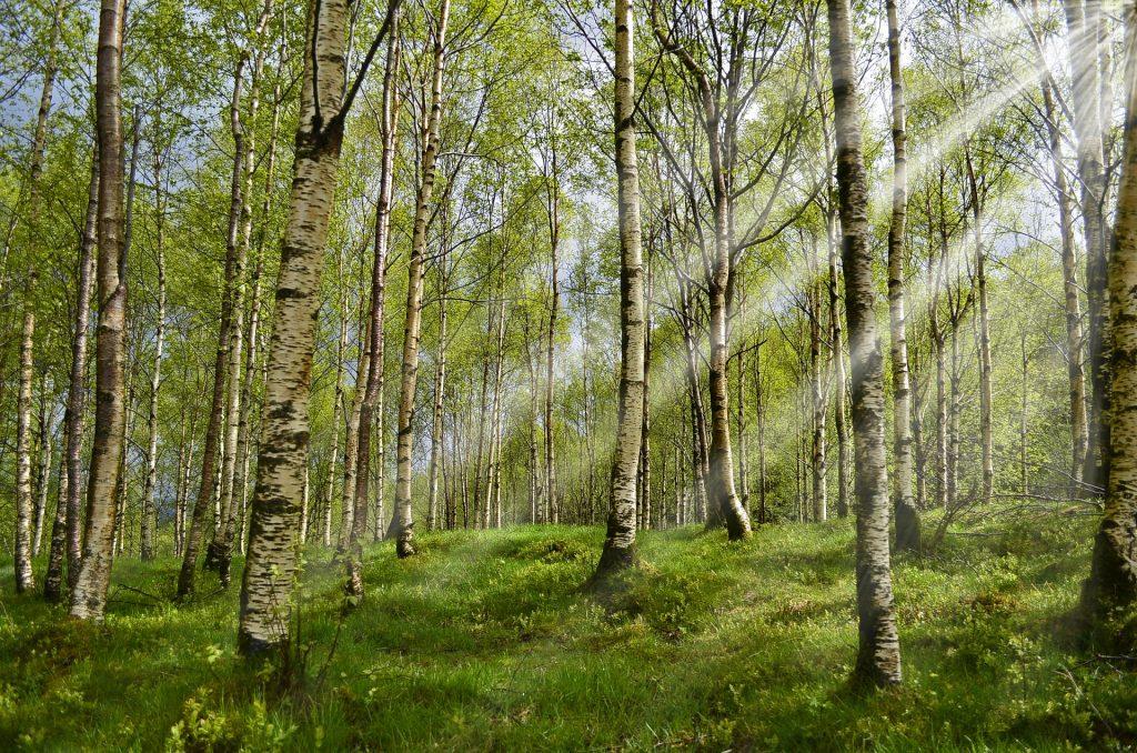 Vi tilbyder alt inden for skovbrug