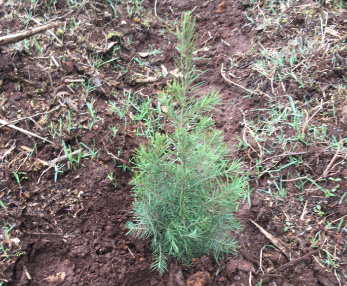 Planter til din skov